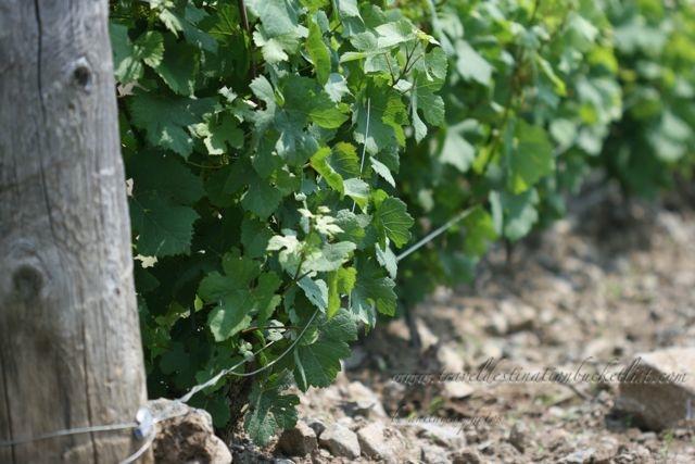Huff Estates Winery