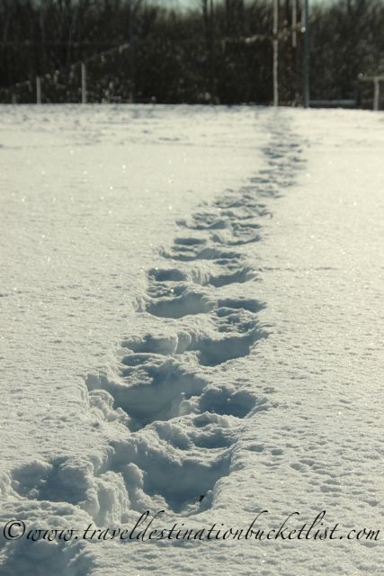 Snow shoe review