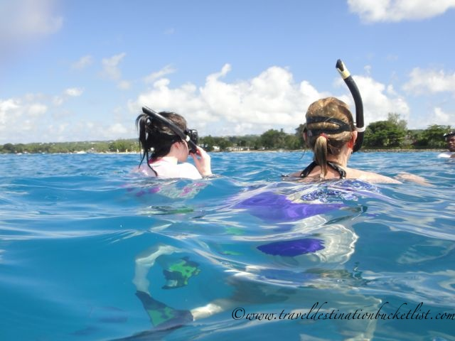 Sea Turtle Cruises in Barbados