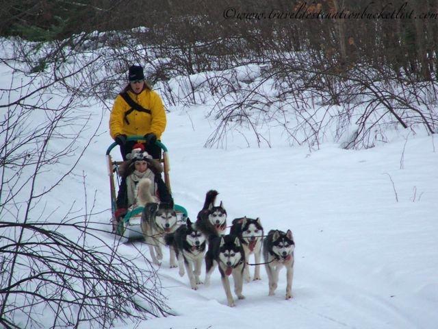 dog sledding holidays
