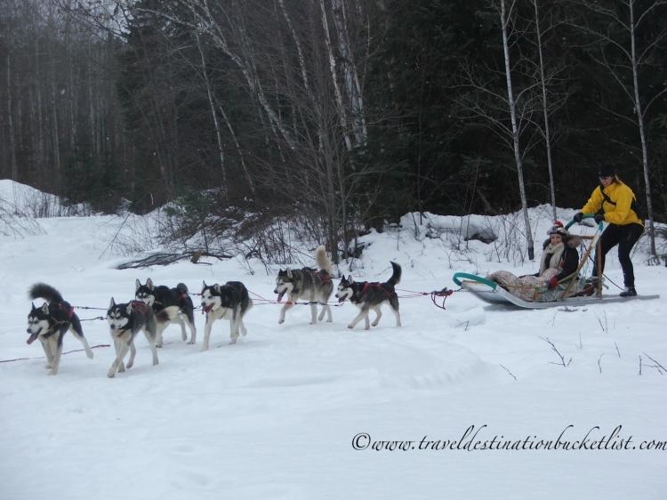 dog sledding Ottawa