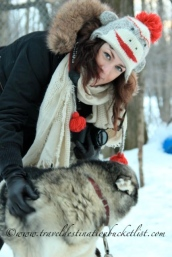 day with sled dogs