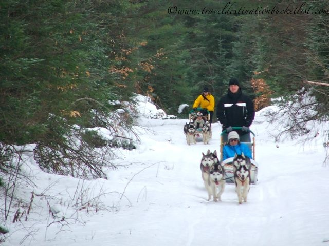dog sledding experiences