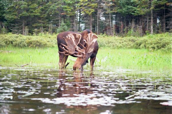 Fingers crossed for a moose sighting.  Photo courtesy of Explorers' Edge