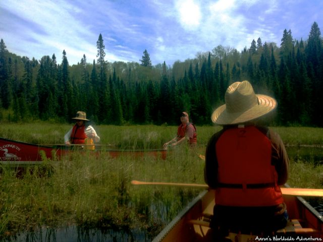 day trip in a canoe in Algonquin Park