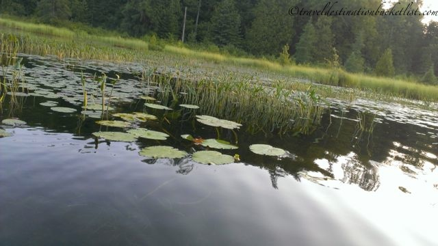 Kayaking with lily pads in Meech Lake, Quebec