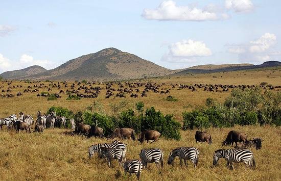 GQ-Masai_Mara_National_Reserve_042